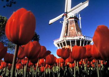 Relocation to Netherlands